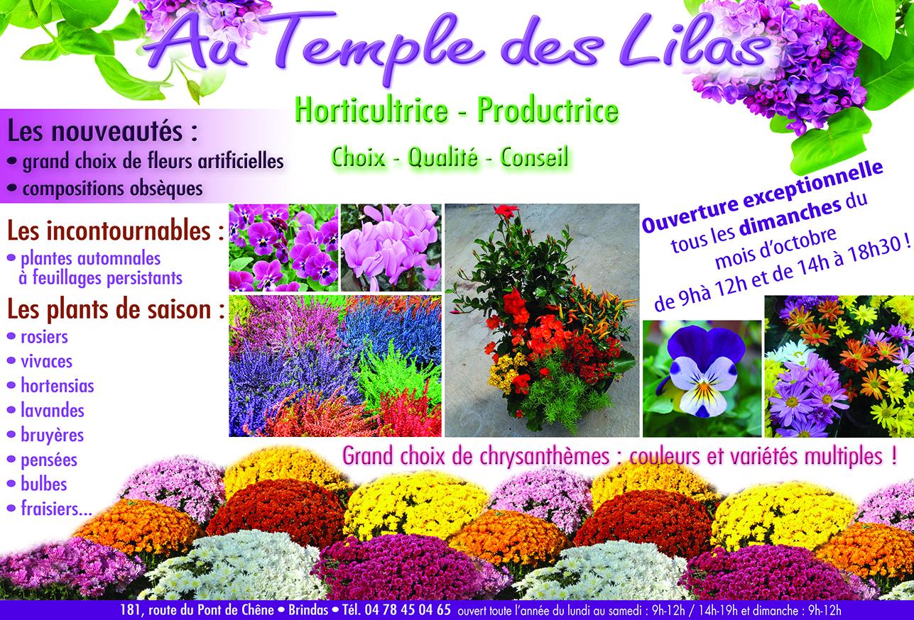 Chrysanthèmes et Pensées de Toussaint